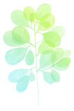 Watercolor decorative green teal branch Stock Photo