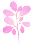 Watercolor decorative pink branch Stock Image
