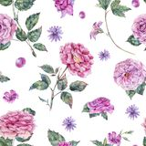 Watercolor decorative vintage pink roses seamless pattern Royalty Free Stock Images