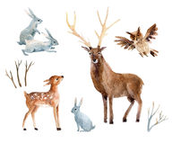 Watercolor deer with fawn, rabbits, birds isolated on white background. Stock Photo