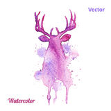 Watercolor deer head Vector on the white Royalty Free Stock Photography