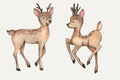 Watercolor deers. Hand-drawn watercolor beautiful couple of deers isolated on the white background. Wild forest animals. Cute characters Stock Illustration