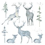 Watercolor Deers and Trees. Hand drawn watercolor set with deers and trees. Great for creating greeting cards, backgrounds and more vector illustration