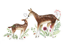 Watercolor deers. On white background watercolor deers. Hand drawn baby deer and mom deer with flowers, mushrooms and berries Stock Photography