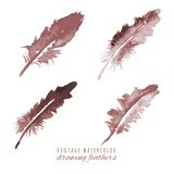 Watercolor design element feather ΠStock Photography