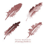 Watercolor design element feather � Stock Images