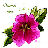 Watercolor design element hollyhock for the realization Royalty Free Stock Photo