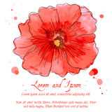 Watercolor design element hollyhock for the realization Royalty Free Stock Images