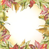 Watercolor different leaves square frame. Seamless pattern with watercolor dry autumn red and yellow leaves of sycamore, grape and chestnut vector illustration