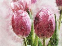 Watercolor Digital Painting of Tulip on Realistic Paper Texture stock illustration