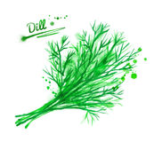 Watercolor dill. Hand drawn watercolor illustration of dill with paint splashes Stock Photos