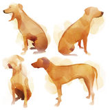 Watercolor Dog Stock Images