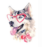 Watercolor dog in red glasses Stock Photo