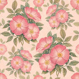 Watercolor dogrose illustration Royalty Free Stock Image