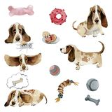 Set of dogs basset hound in different poses with toys vector illustration