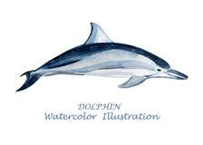 Watercolor dolphin illustration. Stock Photo