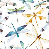 Watercolor dragonflies pattern Stock Images