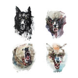 Watercolor drawing of angry looking wolfs and bear. Animal portrait on white background. Royalty Free Stock Image