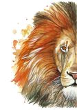 Watercolor drawing of an animal mammal animal predator of a red lion, red mane, lion-king of beasts, portrait of greatness, streng. Th, kingdom, india, in front Royalty Free Stock Photography