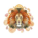 Watercolor drawing of an animal mammal predator, red lion, red mane, lion-king of beasts, portrait of greatness, strength, kingdom Royalty Free Stock Images