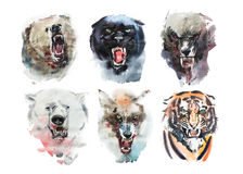 Watercolor drawing animal portrait on white background. Stock Image