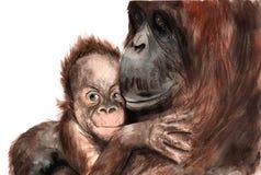 Watercolor drawing - animals - orangutan with baby, sketch royalty free illustration