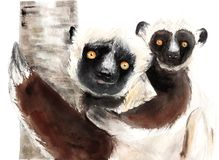 Watercolor drawing of animals - sifaki with baby, lemur vector illustration