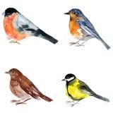 Watercolor drawing bird Royalty Free Stock Photo