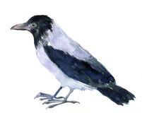 Watercolor drawing bird Stock Image