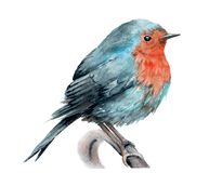 Watercolor drawing of a bird. robin on a branch. Sketch vector illustration