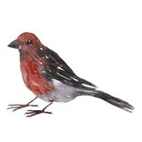 Watercolor drawing bird Royalty Free Stock Photography
