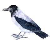 Watercolor drawing bird Stock Photography