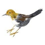 Watercolor drawing bird Stock Photos