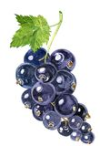 Watercolor drawing blackcurrant Royalty Free Stock Image