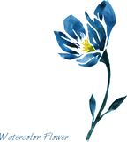 Watercolor drawing blue flower Stock Images