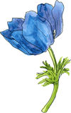 Watercolor drawing blue flower Stock Image