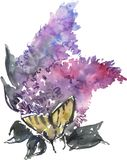Watercolor drawing blue lilac and butterfly stock illustration