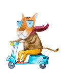 Watercolor drawing of cartoon tiger wearing trendy hipster clothes riding a motorbike isolated on white background Royalty Free Stock Photo