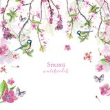 Watercolor drawing of cherry cherry blossoms cherry blossoms, pink flowers, gentle tones, on the theme of spring, mother`s day, M. Arch 8, birthday with birds Stock Photos