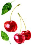 Watercolor drawing cherry Stock Photos