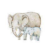 Watercolor drawing of elephant family, mother and calf.  Stock Photos