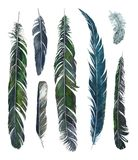 Watercolor drawing feathers Stock Photography