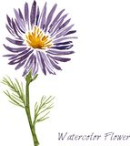 Watercolor drawing flower Royalty Free Stock Photos