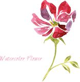 Watercolor drawing flower Stock Photo