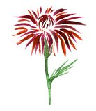 Watercolor drawing flower Royalty Free Stock Images