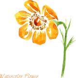 Watercolor drawing flower Stock Photography