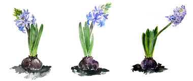 Watercolor drawing flowers Royalty Free Stock Photo