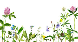 Watercolor drawing flowers and herbs Royalty Free Stock Images