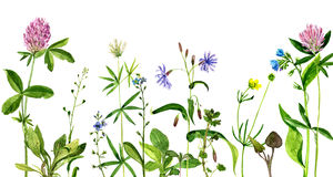 Watercolor drawing flowers and herbs Royalty Free Stock Photos