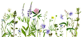 Watercolor drawing flowers and herbs Stock Photography